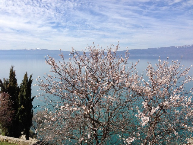 Cherry blossom, Lake Ohrid, Macedonia